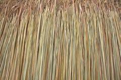 De textuur van met stro bedekt Stock Foto's