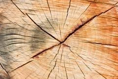 De textuur van Nice van droog hout Stock Foto's