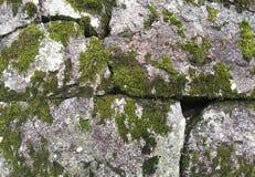De textuur van oude steenmuur behandelde groen mos Royalty-vrije Stock Foto's