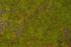 De textuur van oude steenmuur behandelde groen mos in Fort Rotterdam, Makassar - Indonesië royalty-vrije stock fotografie