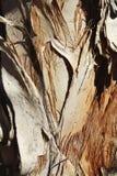 De Textuur van Paperbark Stock Afbeelding