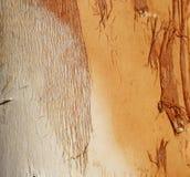 De Textuur van Paperbark Stock Afbeeldingen