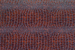De textuur van purpere krokodilhuid Stock Foto's