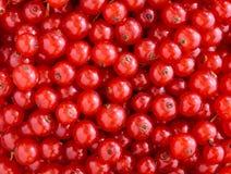De textuur van rode aalbessen Stock Fotografie