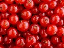 De textuur van rode aalbessen Stock Foto