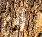 De textuur van de schors van de oude boom met barsten en fouten Structuur van hout stock foto's