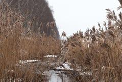 De textuur van smeltingswater in de lente de stroom van de lentekreek Stock Fotografie