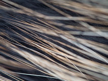 De textuur van sommige sterk varkenshaar Royalty-vrije Stock Fotografie