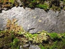 De textuur van de steen met mos Stock Foto's