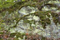 De textuur van de steen met mos wordt overwoekerd dat De textuur van de steen Natuurlijke bergsteen in de bos overwoekerde Stenen royalty-vrije stock afbeelding