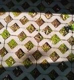 De textuur van de straatkunst bij zonnige dag royalty-vrije stock afbeeldingen