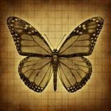 De textuur van vlindergrunge Stock Afbeeldingen