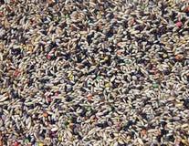 De textuur van zaden Stock Foto