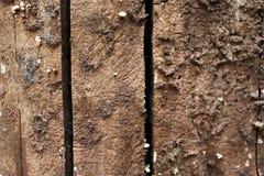De textuurachtergrond van de boomschors - Beeld een boom van Thailand royalty-vrije stock foto