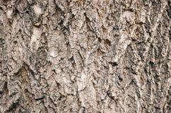 De textuurachtergrond van de boomschors Sluit omhoog foto Stock Afbeelding
