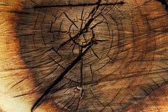 De textuurachtergrond van de boom Stock Afbeelding