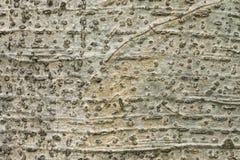 De textuurachtergrond van de boomschors Stock Fotografie