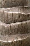 De textuurachtergrond van de kokospalmboomstam Royalty-vrije Stock Afbeelding