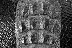 De textuurachtergrond van de krokodilhuid Royalty-vrije Stock Foto's