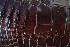 De textuurachtergrond van de krokodilhuid Stock Foto