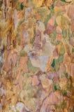 De textuurachtergrond van de pijnboomschors Stock Afbeeldingen
