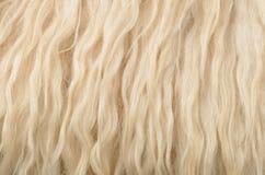 De textuurachtergrond van de schapehuid Stock Afbeeldingen
