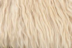 De textuurachtergrond van de schapehuid Stock Afbeelding