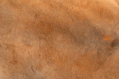 De textuurachtergrond van het kangoeroebont Royalty-vrije Stock Foto's