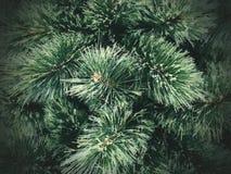 de textuurachtergrond van de Kerstmisboom royalty-vrije stock afbeelding