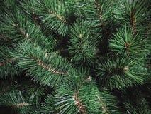 de textuurachtergrond van de Kerstmisboom stock afbeeldingen