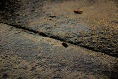 De textuurachtergrond van de mortiermuur Stock Foto's