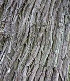 De textuurclose-up van de boomschors Royalty-vrije Stock Foto