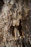 De Textuurdetail van het boomteeltweefsel royalty-vrije stock afbeeldingen