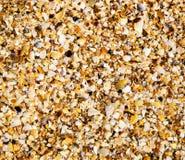 De textuurkust van de close-up van shells Royalty-vrije Stock Afbeelding