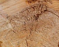 De textuurzaag sneed de oude boom Stock Afbeelding
