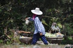 De Thaise arbeider draagt visseëierenfruit en groenten royalty-vrije stock foto