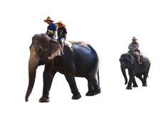 De Thaise die olifant van Azië op witte achtergrond wordt geïsoleerd stock foto's