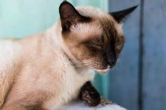 De Thaise kat neemt een dutje in de avond royalty-vrije stock fotografie