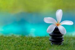 De Thaise Kuuroordmassage met rock spa en Plumeria bloeit dichtbij zwembad Royalty-vrije Stock Afbeelding