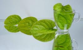 De thee & de bronchitis van het kweepeerblad, hoest, en spanningsthee stock foto