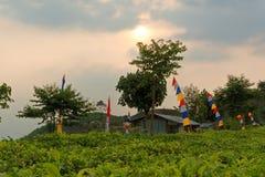 De thee plant dichtbij Ceto-Tempel in Centraal Java royalty-vrije stock foto