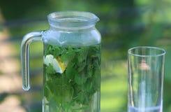 De thee van de citroenbalsem in een glaskruik, in openlucht Royalty-vrije Stock Foto