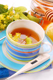 De thee van de linde Stock Foto