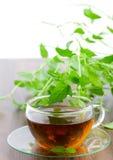 De thee van de pepermunt Stock Fotografie