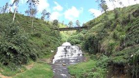 De theeaanplantingen van Sri Lanka