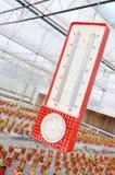 De thermometer van de serre Stock Foto's