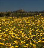 De tidiga vårblommorna av Cypern Royaltyfri Bild