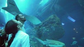 De tiener met Papa bewondert het mariene leven in de glastunnel van het Aquarium in van de de Wandelgalerijvoorraad van Doubai de stock videobeelden