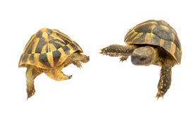 De tiener schildpadden van mutantninja stock afbeelding