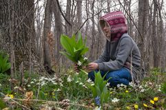 De tiener van het meisjeskind in het bos vindt en besnoeiingen de eerste van sneeuwklokjes bloeit stock fotografie